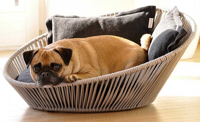 panier à chien décoratif